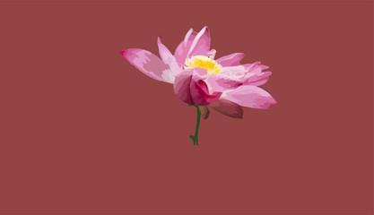 Pink Lotus Flower Illustration