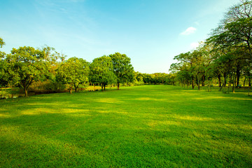 green grass field  in urban public park
