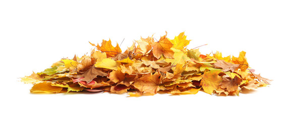 Heap of autumn leaves on white background Wall mural