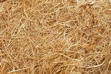 Fototapeta Dry yellow straw grass background texture obraz