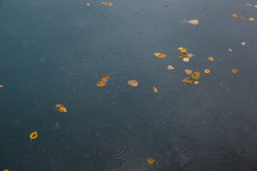 autumn leaves on background of blue water