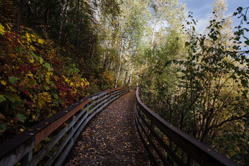wooden rails in the forest