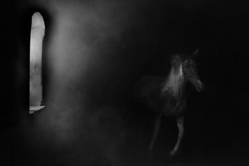 """horse """"magic fly"""""""