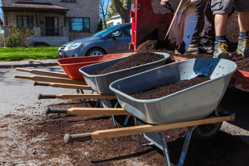 Three wheelbarrows getting filled by black soil in a suburban environment as part of a landscaping project