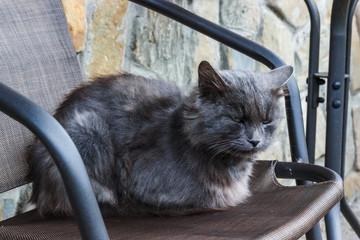 Bad and sad depressive Homeless grey cat