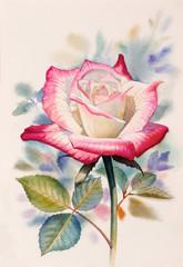 Watercolor painting original of rose.