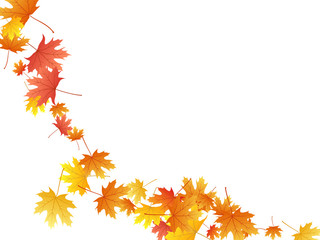 Maple leaves vector background, autumn foliage on white graphic design.