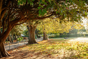 Trees of Victoria Park in Frome, in Autumn.