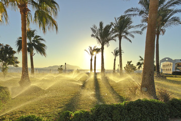 Enchanting picture: Jets of automatic irrigation of palm trees in the rays of the rising sun
