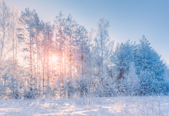 Winter landscape with a view of trees in the snow with the sun