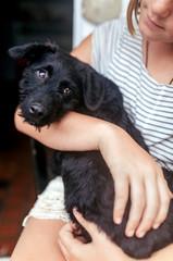 Portrait of black puppy on girl's lap