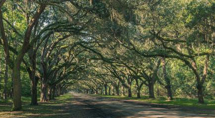 Wormsloe Oak Plantation, Savannah, Georgia, USA - July 10, 2018: Long road lined with ancient live oak trees draped in spanish moss at historic Wormsloe Plantation