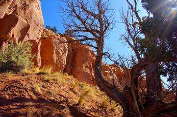 Sunlite dead tree against red rocky bluff