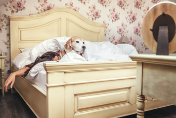 Woman sleep in bed and beagle dog lies under blanket with her