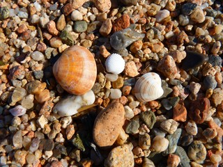 The shell is the outer skeleton of the mollusks, their fortress, which they build themselves throughout life.