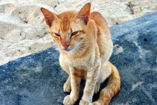 Very thin and starving orange cat in Malaysia.