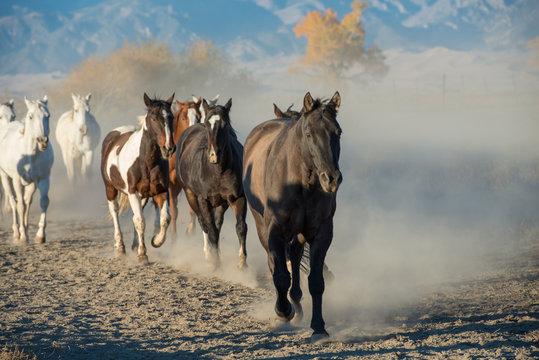 Horses on path