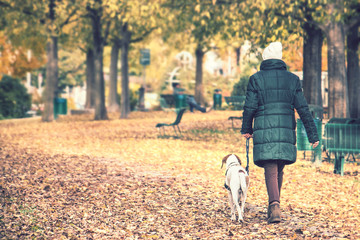 Lonely Woman With Dog In Fall Season. She taking her little pet for a walk