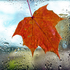 Autumn background. Drops of rain and maple leaf on the wet window glass and autumn colors of red orange and yellow. Blurred abstract texture background.