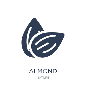 Almond icon. Trendy flat vector Almond icon on white background from nature collection