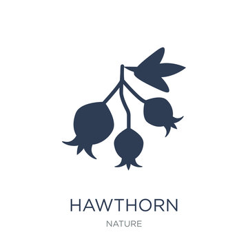 Hawthorn icon. Trendy flat vector Hawthorn icon on white background from nature collection