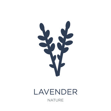 Lavender icon. Trendy flat vector Lavender icon on white background from nature collection