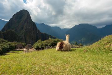 Machu Picchu Showstopper