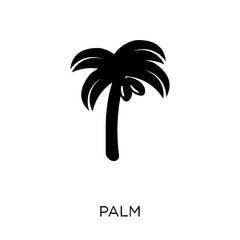 Palm icon. Palm symbol design from Fruit and vegetables collection.