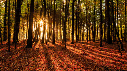 Sun rays and shady leading lines in the woods / Herbstwald in der Südheide mit markanten Sonnenstrahlen