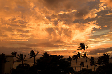 Vivid Orange Clouds at Sunset Sky over Ocean Seascape with Trees in Silhouette
