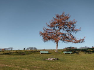 Tree in pastel colours with two benches in the countryside in Switzerland.