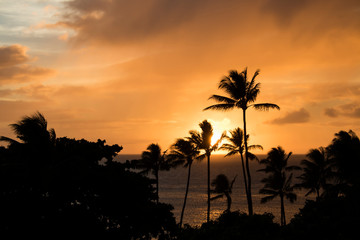 Orange Clouds at Sunset Reflecting on Ocean Surface with Palm Trees Silhouette