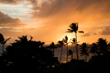 Sunset Seascape with Orange Clouds and Sun on Ocean Horizon with Palm Trees Silhouette