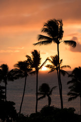 Vertical Sunset with Sun on Ocean Horizon and Palm Trees Silhouette