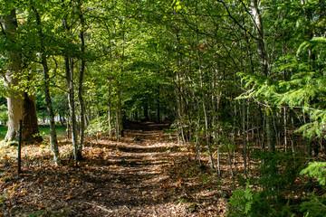 hidden path in the woods