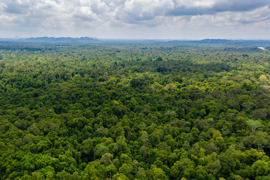 Aerial drone view of the tree canopy of dense tropical rainforest