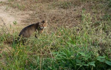 野良猫の写真 / 猫のイメージ