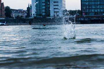 Stein fällt ins Wasser an den Kranhäusern am Rhein