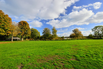 Zielona łąka wśród drzew pod niebiem z buiałymi obłokami.