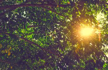 Sunbeam in a greem autumn leaves