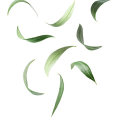 Set with green olive leaves falling on white background