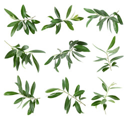 Set with green olive twigs and leaves on white background