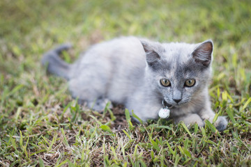 Kitten playing in garden