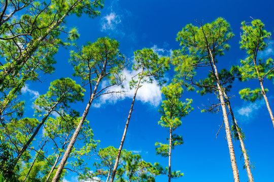 blue sky and tree (upward shot)