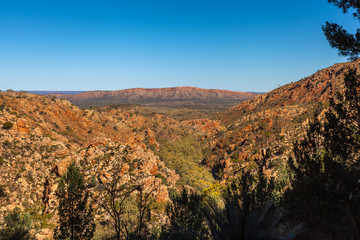 The Standley Chasm canyon covered by vegetation and the MacDonnell Ranges in distance from Larapinta Hill, Northern Territory, Australia