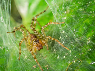 Macro photography of spider with drops and blurry green leaf.
