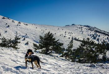 Perro paseando por montaña nevada