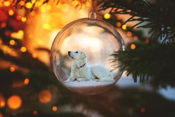 Weisser Hund in Weihnachtskugel