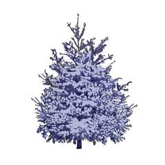 Blue spruce under snow
