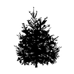 Fir-tree silhouette on a white background